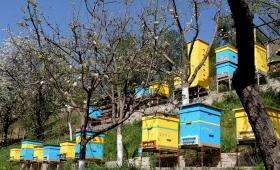 """Пчелин """"Бат Насе"""" с. Пещера"""